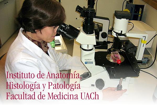 Instituto de Anatomía, Histología y Patología